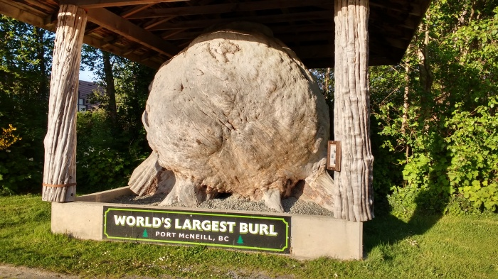 Port McNiell burl the worlds largest. Photo Ray Penson