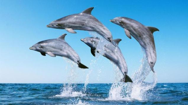 Moving North and first Dolphins. Image Credit Referencedotcom
