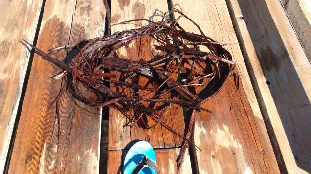 Strips of Cedar bark from the propeller. Ray Penson