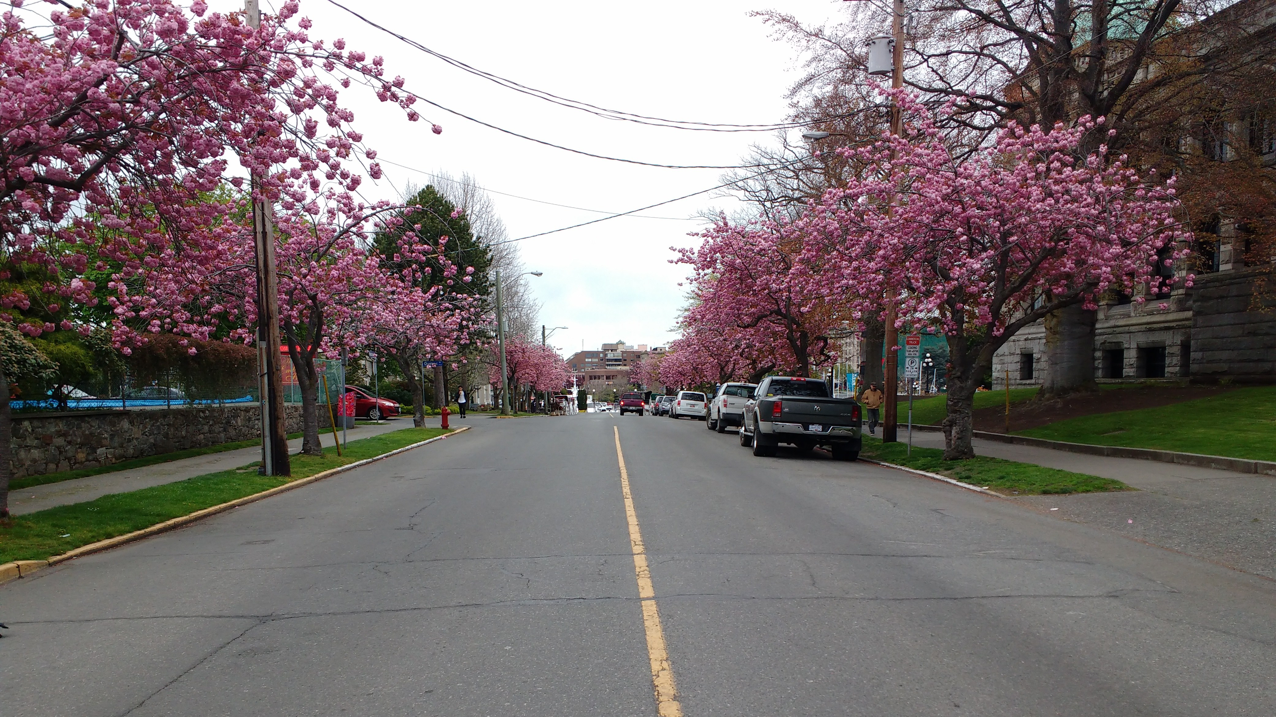 Spring Blossom in Victoria. Photo Ray Penson jpg