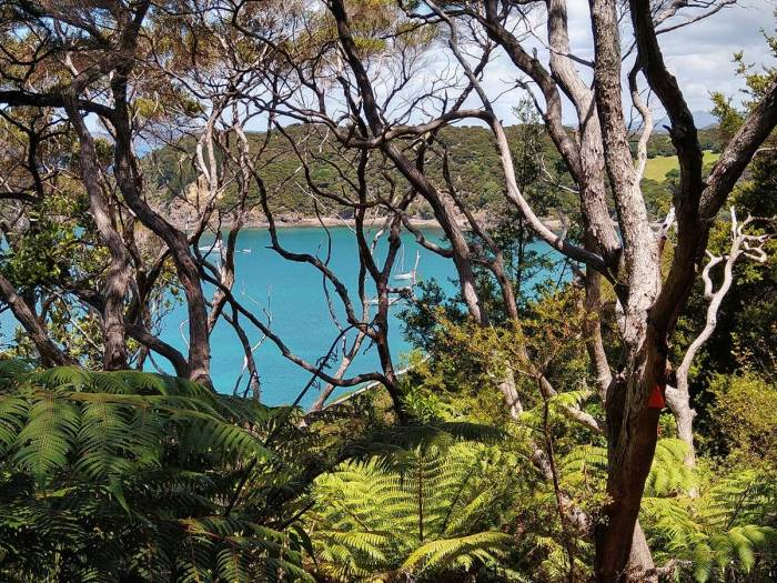 whangamumu-harbour-through-the-bush.-photo-ray-penson
