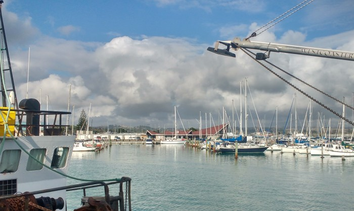 Truce at Napier Sailing Club Visitor Berth. Photo Ray Penson