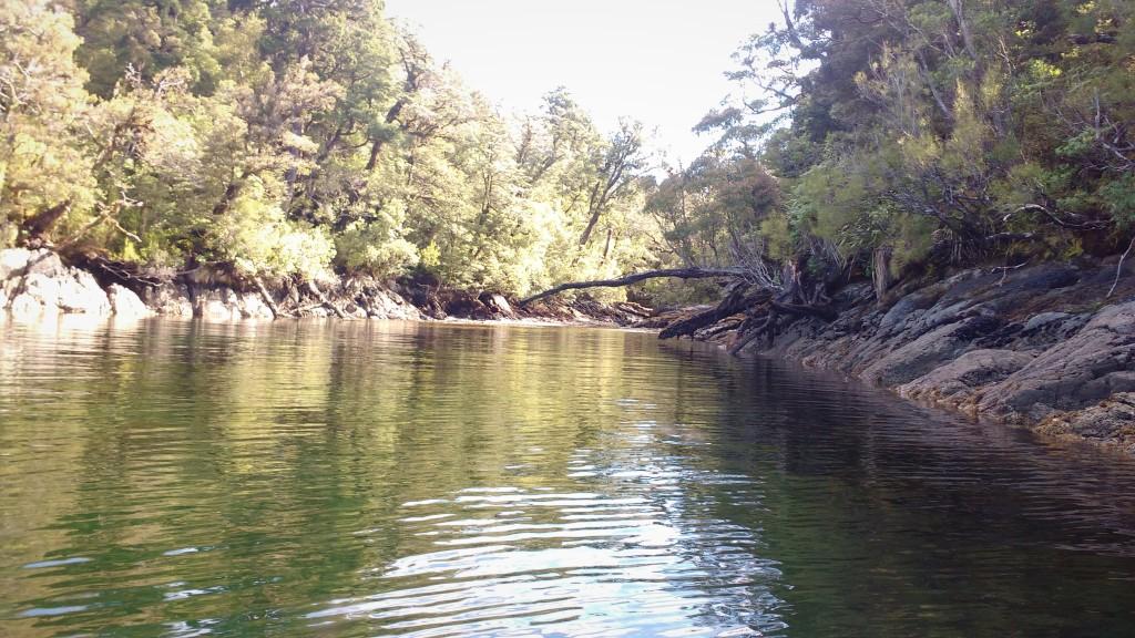 Stream at the head of Cooks Cove. Photo Ngozi penson